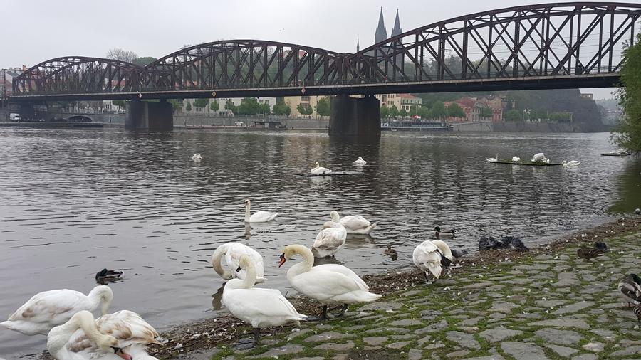 Prag'da bahar başka 2
