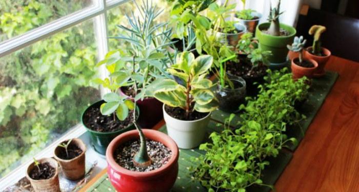 Evinizde pozitif enerji yaratacak 7 bitki 1