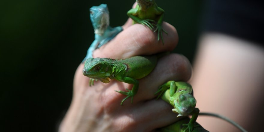 Bursa Hayvanat Bahçesi'nin yeni üyeleri...