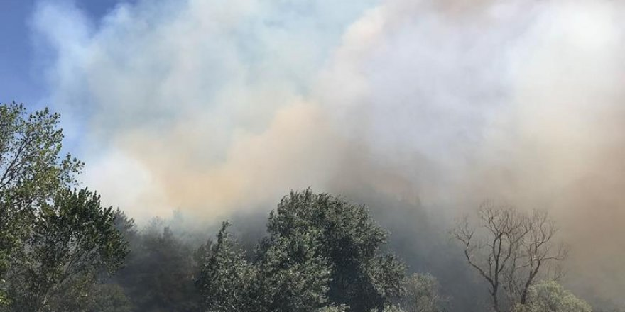 Mudanya'da orman yangını!