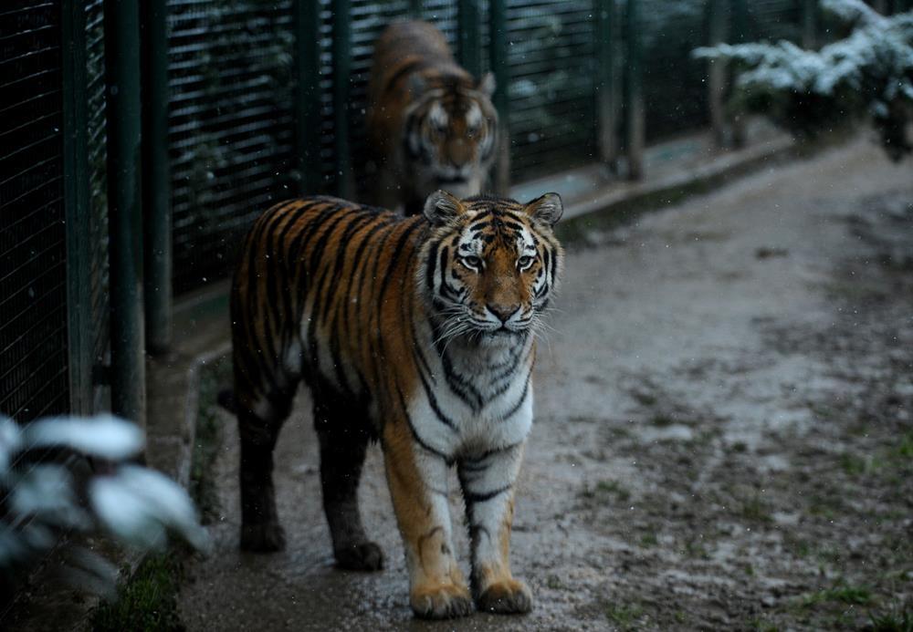 Bursa Hayvanat Bahçesi'nden muhteşem görüntüler 1