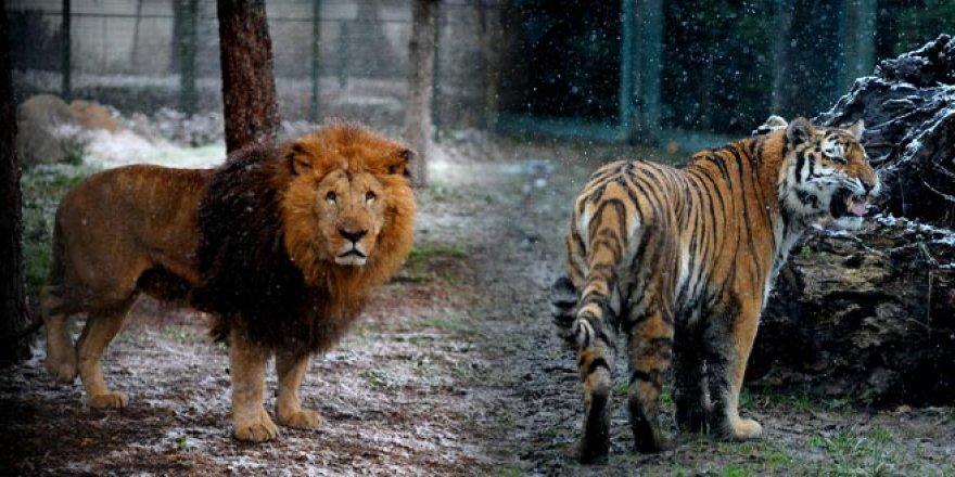 Bursa Hayvanat Bahçesi'nden muhteşem görüntüler