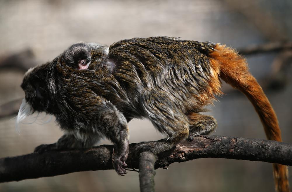 Bursa Hayvanat Bahçesi'nde yavru heyecanı 1