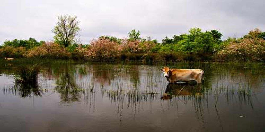 Karacabey Longoz Ormanları'ndan muhteşem görüntüler