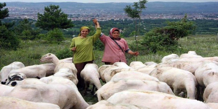 Bunlar da girişimci çoban kız kardeşler