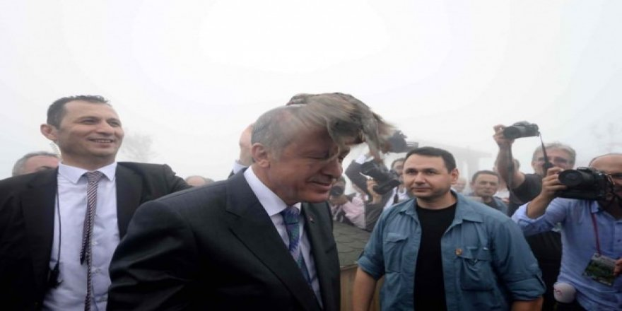 Cumhurbaşkanı Erdoğan'ın başına keklik kondu