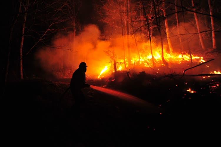 Bursa'da orman yangını 1