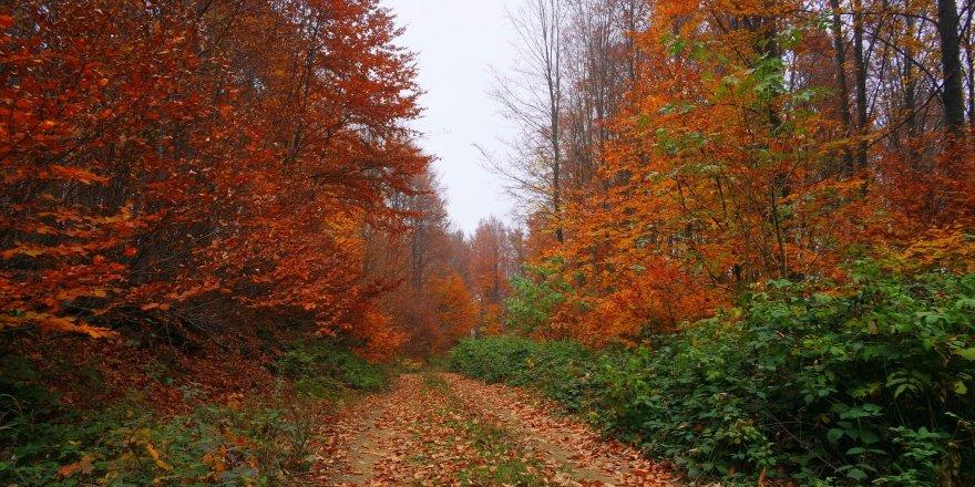 Uludağ'da sonbahar göz kamaştırıyor