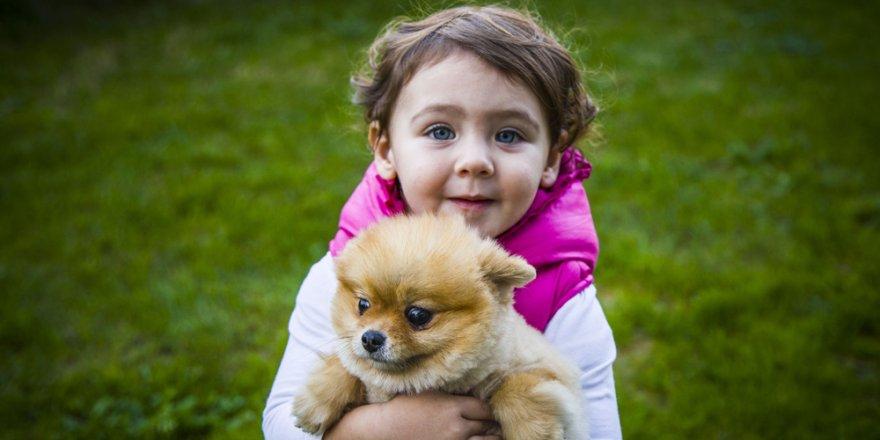 'Oyuncak ayı' görünümlü köpeklere ilgi