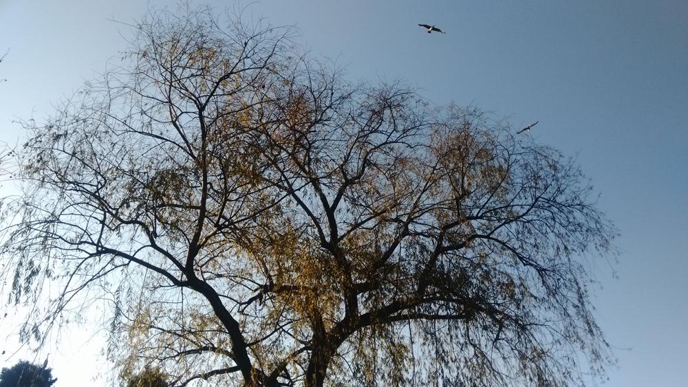 Gölet ve kuşları 1