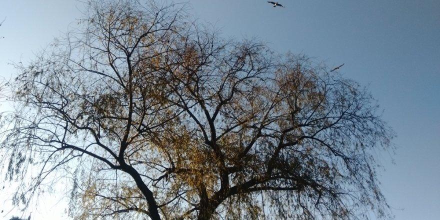 Gölet ve kuşları