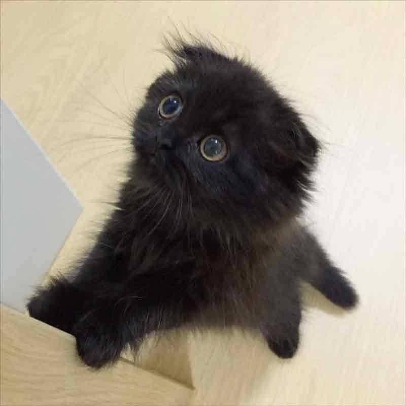 Dünyanın en sevimli kedisi Gimo 1