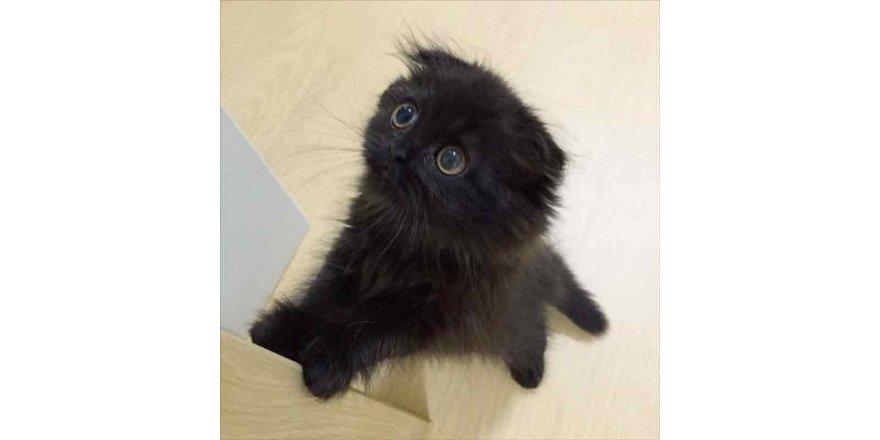 Dünyanın en sevimli kedisi Gimo