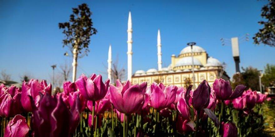 Osmanlı payitahtı Bursa'da 'lale devri'