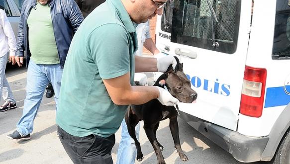 Pitbull dehşetini polis önledi