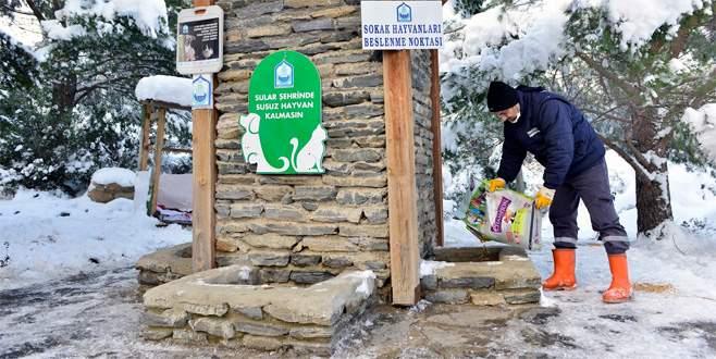 Karda aç kalan sokak hayvanlarına belediye şefkati
