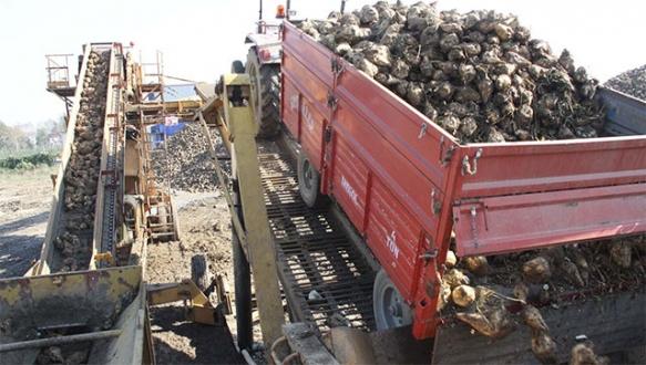 Kota kalktı, İnegöl'de pancar üretimi arttı
