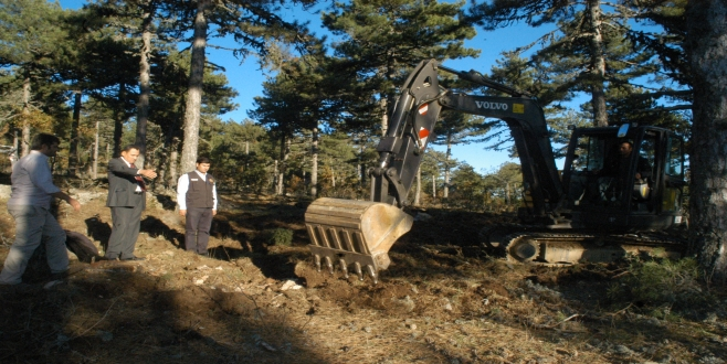 Orman gençleştirme çalışmaları hızlandı