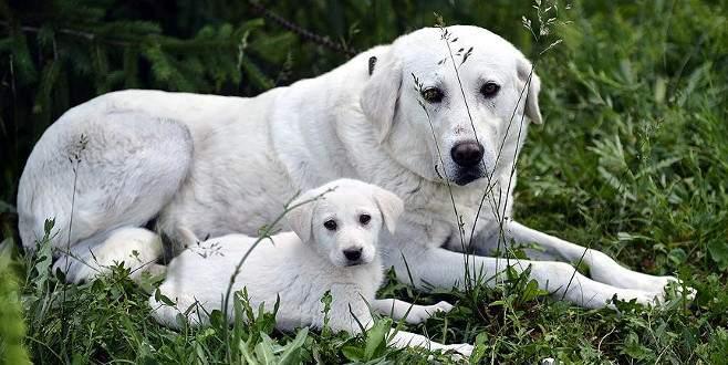 Bir hayvanla yaşamaya başlamanın vicdani sorumluluğu üzerine
