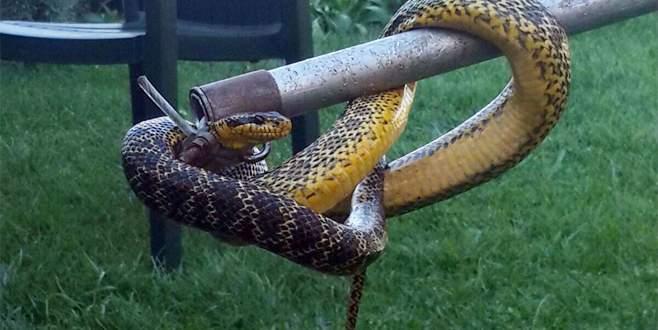 Bursa'da kuş yuvasından yılan çıktı