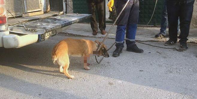 Kavga sırasında bahçede havlayan köpeği bıçakladı