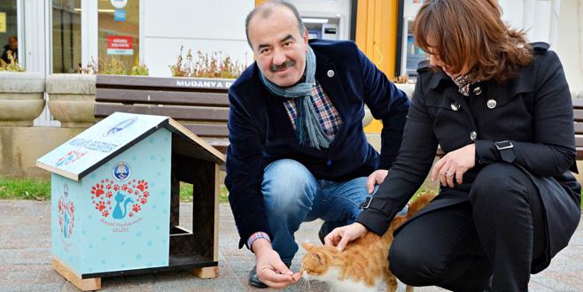 Mudanya'da kediler artık üşümeyecek
