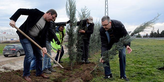 Yeşil Karacabey için ağaçlandırma
