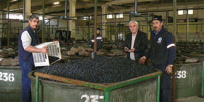 Orhangazili zeytinciye 13 milyon TL ödeme