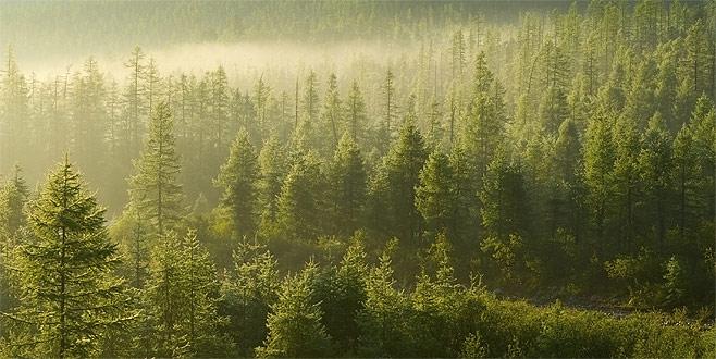 Ormanlar artık daha güvende