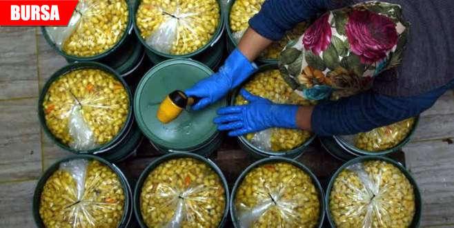 Gedelekli turşucular ramazana hazırlanıyor