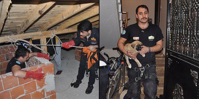 Bursa'da köpek kurtarma operasyonu