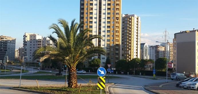 Nilüfer'de palmiyeler yeni yerinde