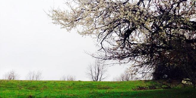 Dağ yöresinde kış ortasında bahar