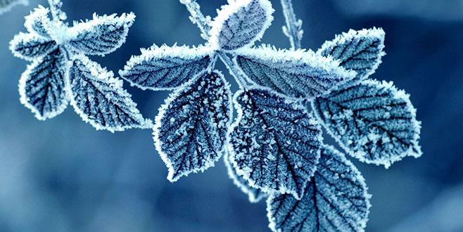 Meteorolojiden 'zirai don' uyarısı
