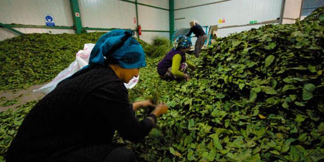 TKDK bin 198 kadın girişimciye hibe verdi