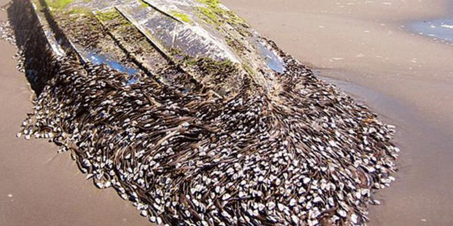 2005'ten beri yavaş yavaş büyüdü...Barajları ve su şebekelerini saran büyük tehlike!