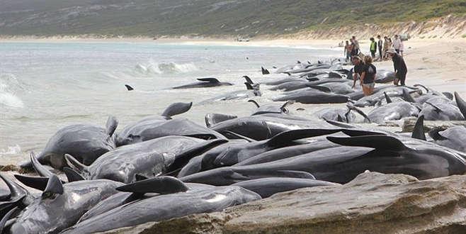 150 balina karaya vurdu