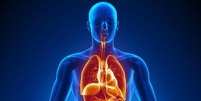 İnsan vücudunda yeni bir 'organ' keşfedildi! Kanserin yayılmasında çok etkili!