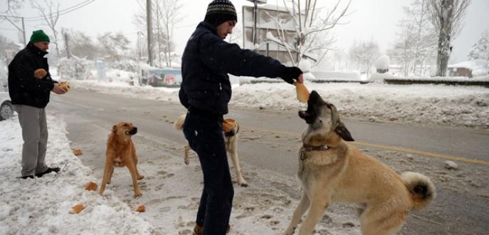 Uludağ'da karda aç kalan hayvanlara belediye şefkati