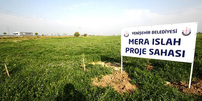 Yenişehir'de meraların ıslahı olumlu sonuçlar verdi
