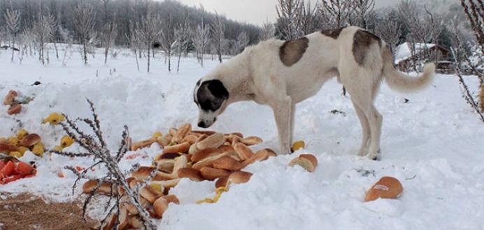 Orman sakinlerine karda ziyafet
