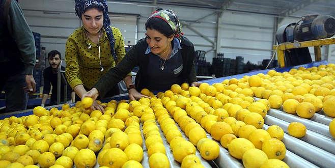 Limon fiyatında büyük uçurum