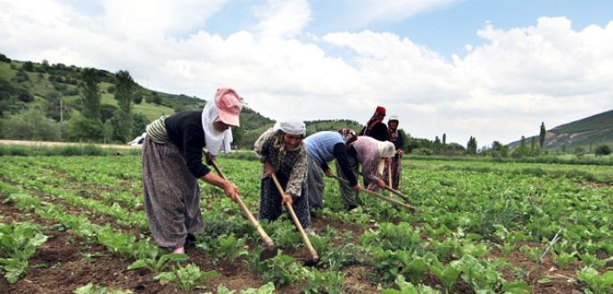 1,9 milyon kadın çiftçiye eğitim