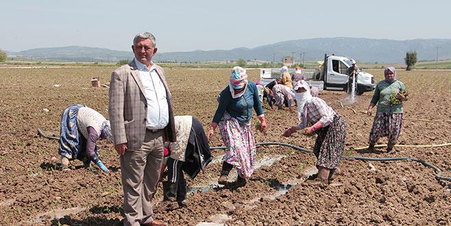 Yenişehirli çiftçiden umutlu başlangıç