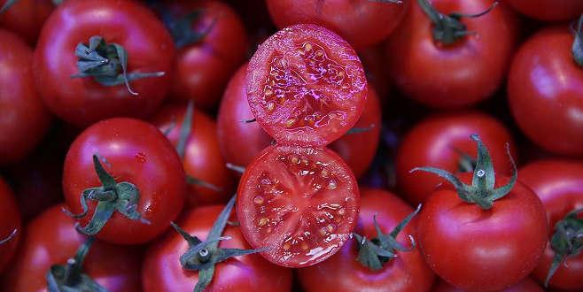 Salçalık domateste yüksek rekolte beklentisi