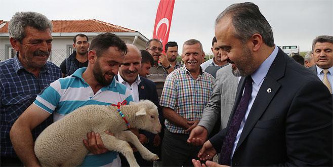 Büyükşehir'den koyun yetiştiricisine büyük destek