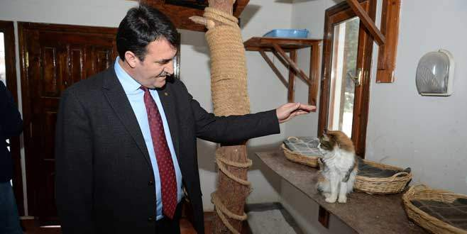 En şanslı kediler Osmangazi'de!