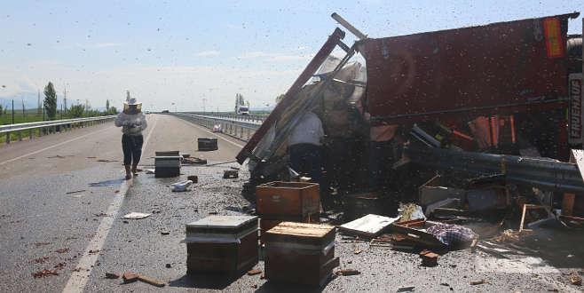 Devrilen TIR'daki arı kovanları karayoluna saçıldı