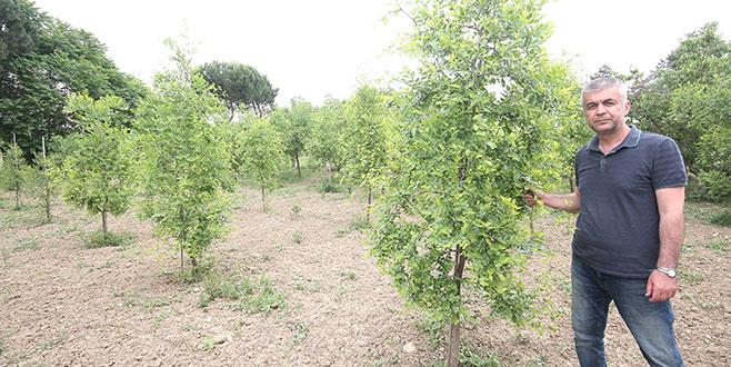 Yenişehir'de çiftçiye yeni ürün seçenekleri