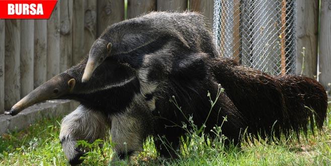Bursa Hayvanat Bahçesi'ne yeni üye